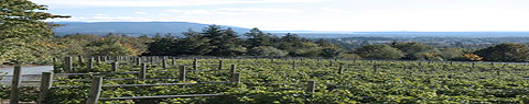 vancouver wine fields
