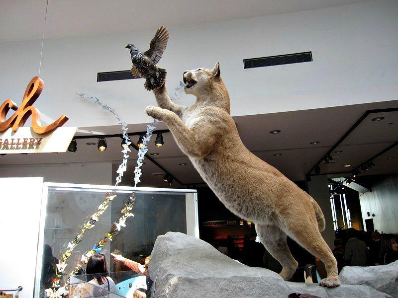 Cougar and Pheasant at Science World