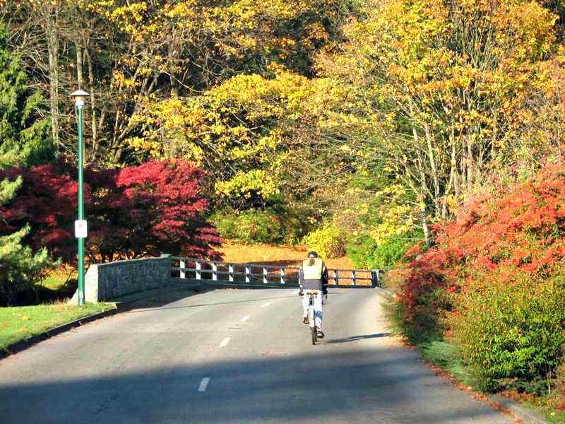 Cycling in the Fall at Stanley Park