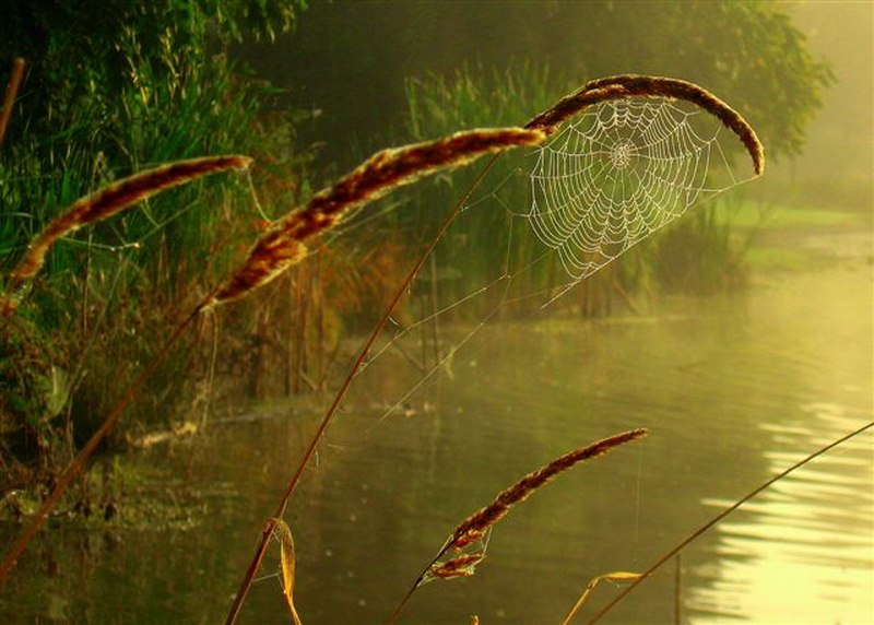 Stanley Park Spiders web pond