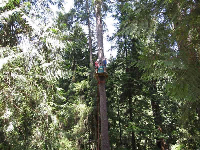 Wildplay Maple Ridge Up in the Trees