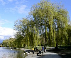 view of Stanley Park in the spring